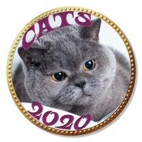 Открытый турнир CATS